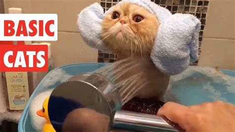 Basic Cats | Funny Cat Video Compilation 2017 – 1Funny.com