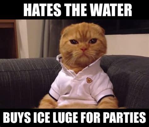 BEST CAT MEMES 2015 image memes at relatably.com