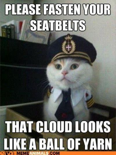 Best Cat Memes   Modern Cat