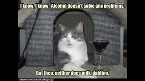 Best Cat Memes Part I   YouTube