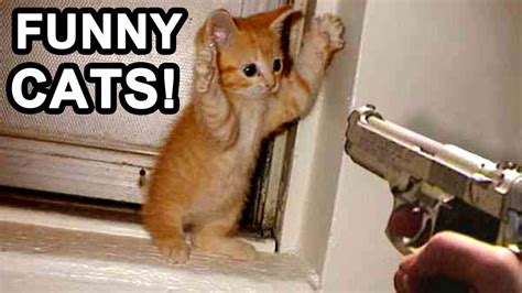 BEST FUNNIEST CAT MOMENTS   Funny Cats Compilation Felines ...