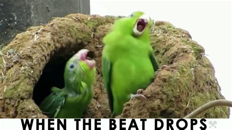 Birb Memes [Clean]   YouTube