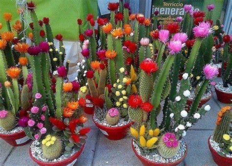 Cactusii   plante si flori de interior foarte usor de ...