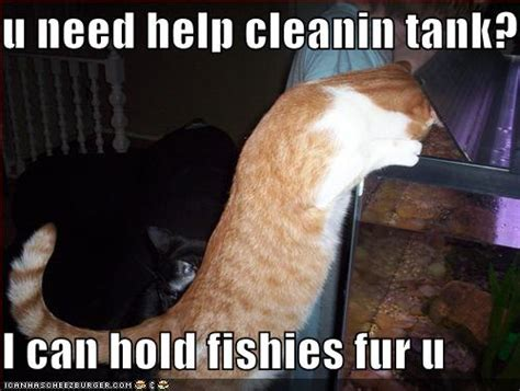 Can I help clean fish tank?   Funny Animals   theDitherer