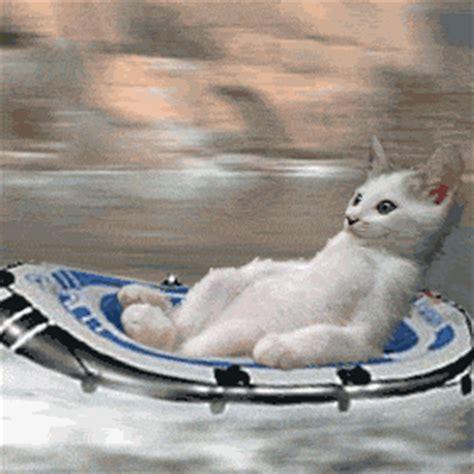 Cat Boat!