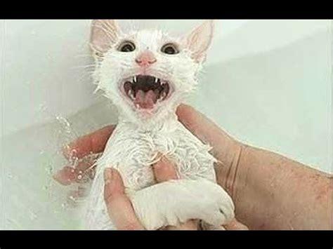 Cat Cleans the Floor | FunnyCat.TV