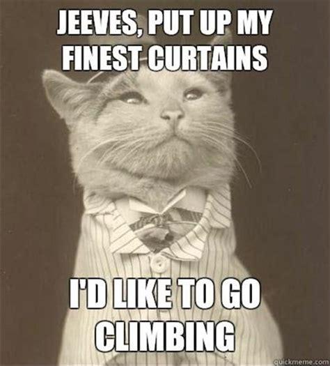 cat meme   Dump A Day