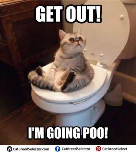 Cat Memes | Cat Breed Selector