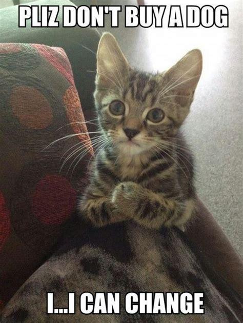 Cat Memes   Funny and Cute Kitten Memes