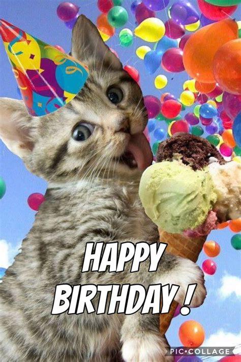 Cat Memes   Happy Birthday Cat Memes   Funny Cat Memes ...