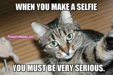 Cat Selfie Meme | www.pixshark.com   Images Galleries With ...
