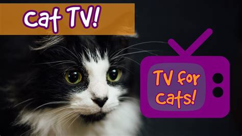 CAT TV! Movies for Cats to Watch, Videos for cats to watch ...