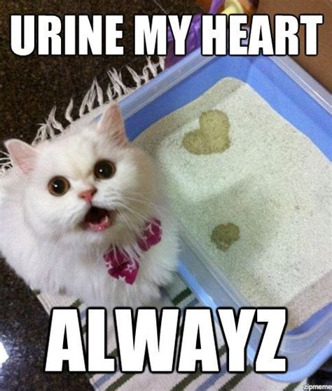 Cats, Cat face and So funny on Pinterest