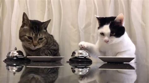 Cats : Waiter Please!!   YouTube