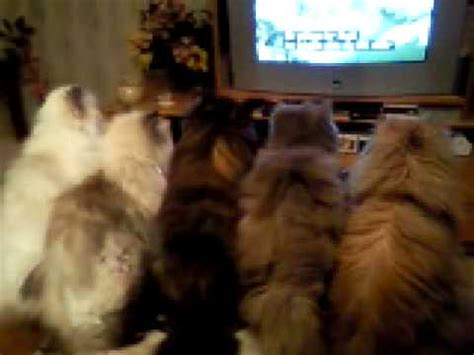 Cats watching TV   YouTube