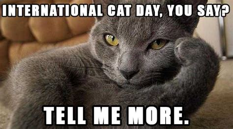 Celebrate International Cat Day With These Adorable  and ...
