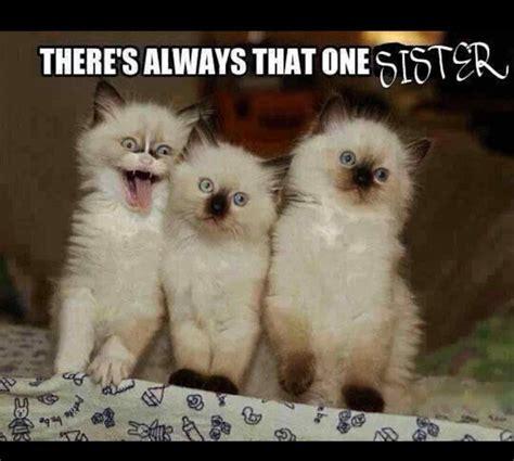 Clean Humorous Memes | siudy.net