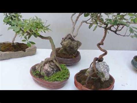 como hacer un jardin con piedras | facilisimo.com