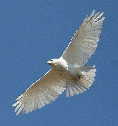 Cuentos cortos para pensar  VI  El vuelo del halcón – WideMat