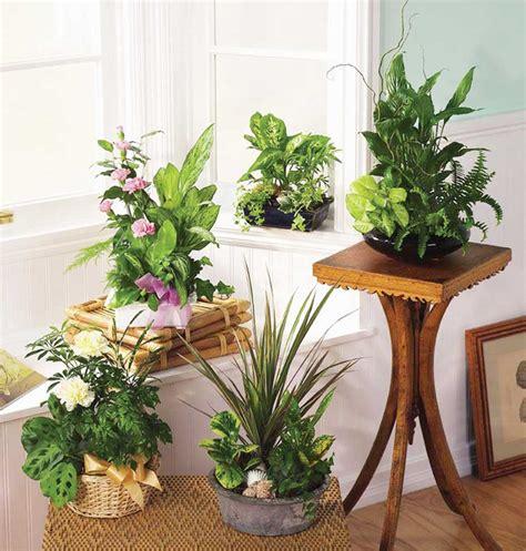 Cum îngrijim plantele de interior pe timp de iarnă ...