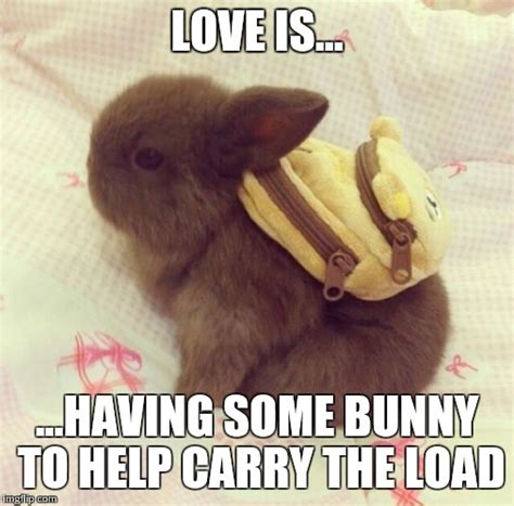 Cute Bunny Memes | www.pixshark.com   Images Galleries ...
