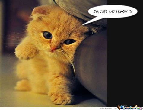 Cute Cat by melissa.schillewaert   Meme Center