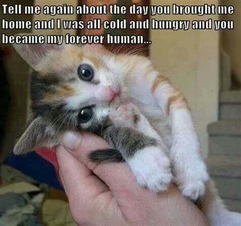 Cute cat meme | Animals | Pinterest | Cute cats, Pets and ...