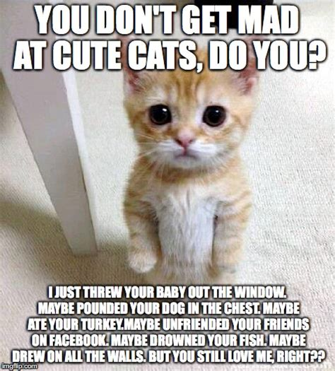Cute Cat Meme   Imgflip