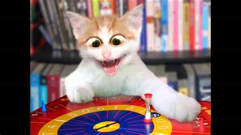 Cute Cat Meme   YouTube