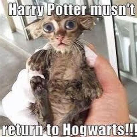 Cute Cat Memes Funny   www.pixshark.com   Images Galleries ...