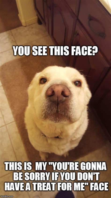 Cute Dog   Imgflip