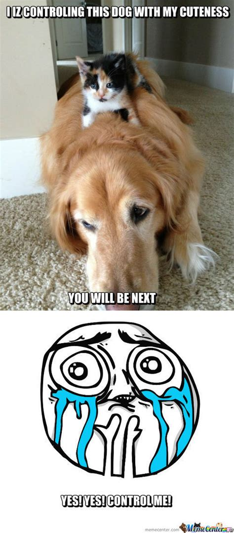 Cute Dog Memes. Best Collection of Funny Cute Dog Pictures