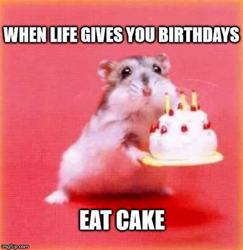cute happy birthday memes picture | Best Birthday Quotes ...