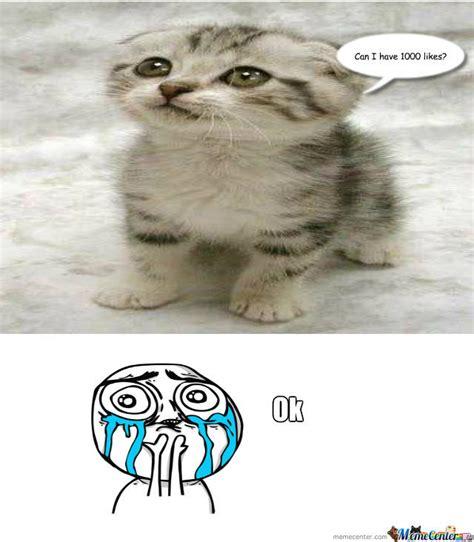 Cute Kitten by recyclebin   Meme Center