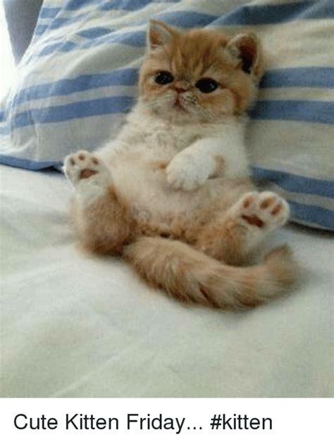 Cute Kitten Friday #Kitten | Meme on SIZZLE