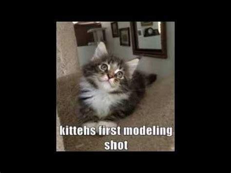 cute kitten meme s :    YouTube