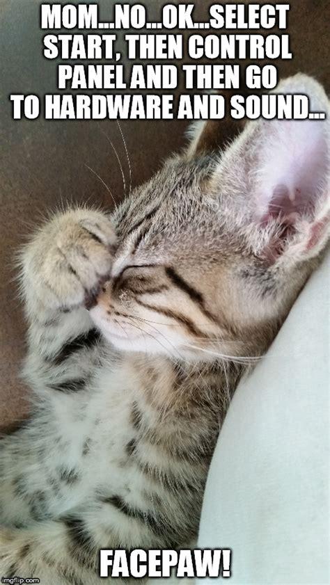 Cute Kitten Pictures With Captions | www.pixshark.com ...