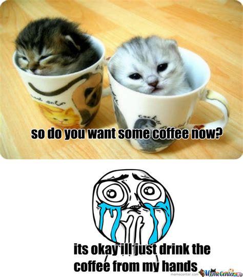 Cute Kittens by nyangrumpycat12   Meme Center