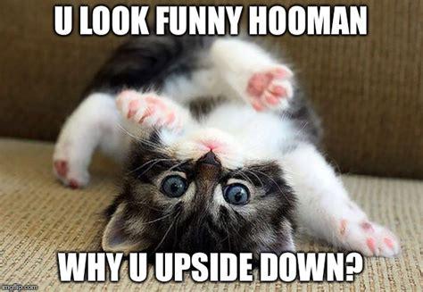 cute kittens   Imgflip