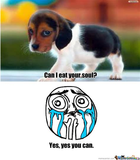 Cute Puppy by mkaism492   Meme Center