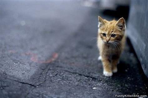 Cutest Kitten Ever   funnykittensite.com