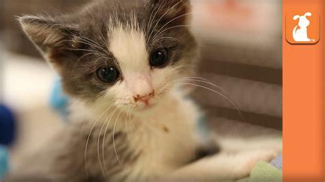 Cutest Kitten Meow EVER   Kitten Love   YouTube