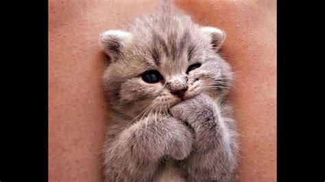 Cutest Kittens Compilation   Best Kittens Ever   Hamster ...