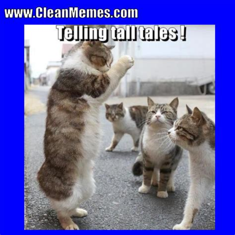 Dank Cat Memes Clean,Cat.Free Download Funny Cute Memes