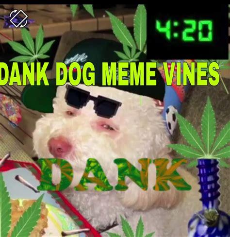 DANK DOG MEME VINES COMPILATION   CRINGE DOG MEMES VINES ...