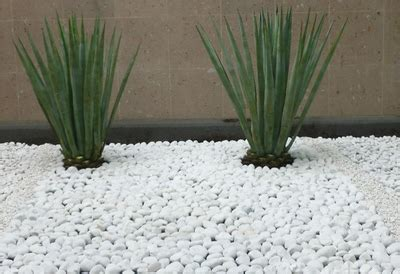 Decoración del jardín; Utiliza piedras blancas   Reformas ...