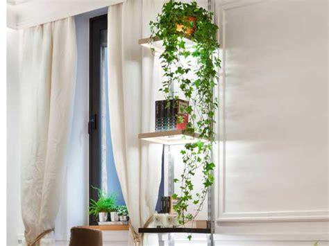 Decorar tu casa con plantas