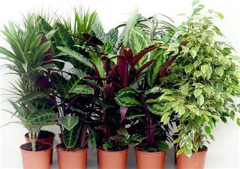 Dedeman Planta interior Mix plante verzi H 110 cm D 21 cm ...