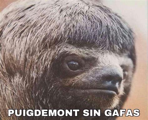 Demigrante: Memes de Puigdemont y su no DUI