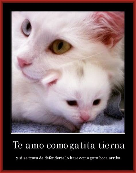 Descarga Bellas Imagenes Tiernas con Mensajes de Amor ...